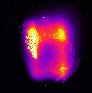 红外热像仪应用于学术研究